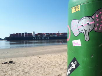 Elitheelephant sunbathing at Elbe River