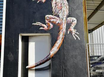 Lezard Gecko