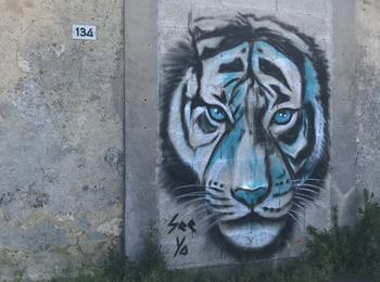 Le tigre de see ya