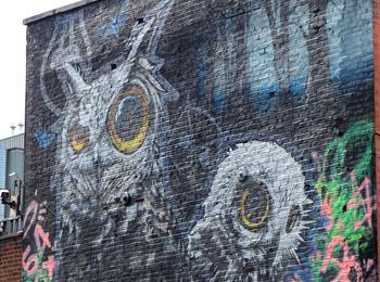 Camden owls